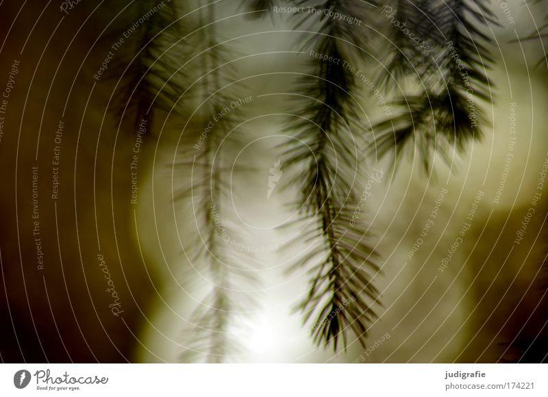 Wald Farbfoto Außenaufnahme Experiment Abend Unschärfe Umwelt Natur Pflanze Baum träumen Nadelbaum Zweig Romantik Märchenwald Geister u. Gespenster Traumwelt