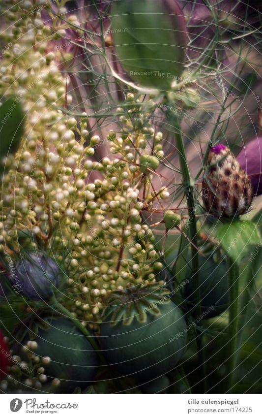 9 Farbfoto Innenaufnahme Muster Menschenleer Pflanze Blüte Dekoration & Verzierung Blumenstrauß fantastisch natürlich schön träumen Natur Stimmung Mohnkapsel