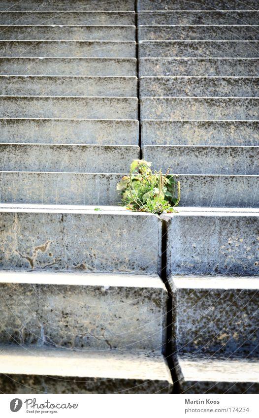 stufenweise Natur grün Stadt Pflanze Leben Wand oben Freiheit grau Stein Traurigkeit Mauer laufen Hoffnung Treppe Wachstum