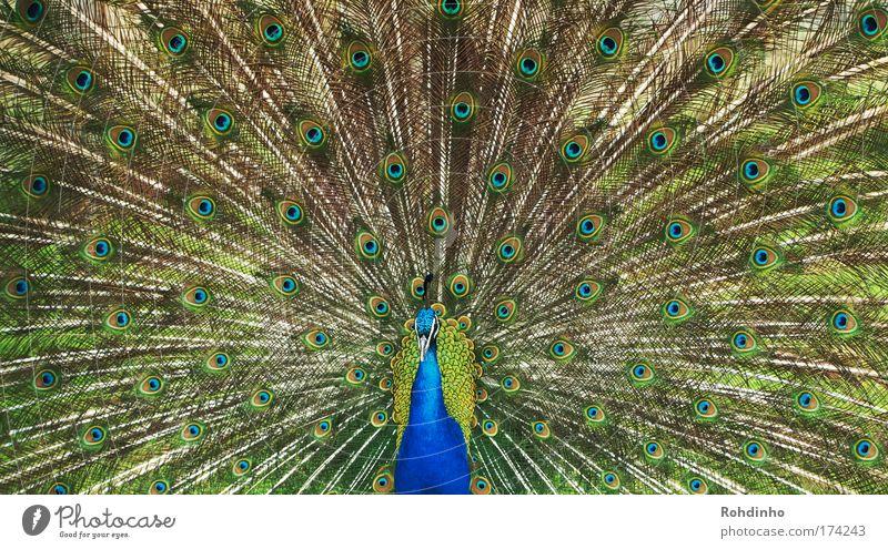 Show me what you got Natur schön blau Sommer Ferien & Urlaub & Reisen Tier Wiese Garten Park Tanzen glänzend elegant mehrfarbig ästhetisch Feder Flügel