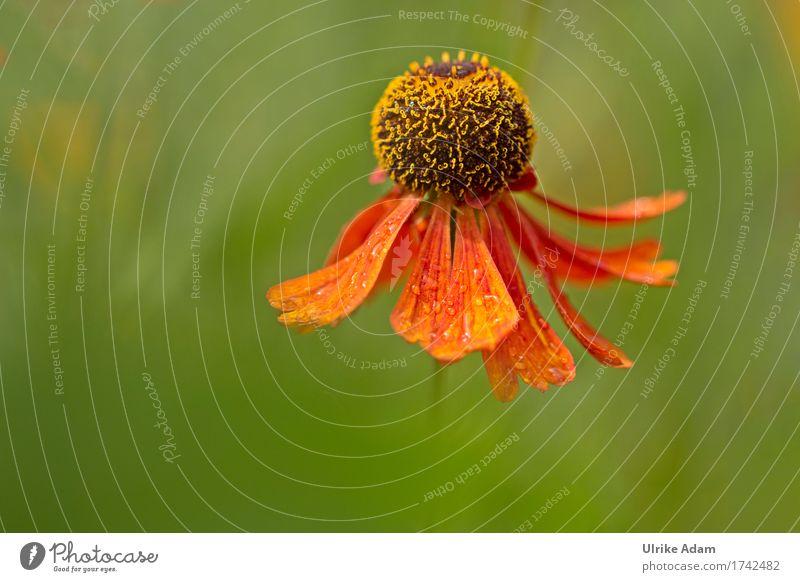 Tanz der Natur Natur Pflanze Sommer grün Blume rot Wärme Blüte Innenarchitektur Herbst Garten Design Park Dekoration & Verzierung elegant Blühend