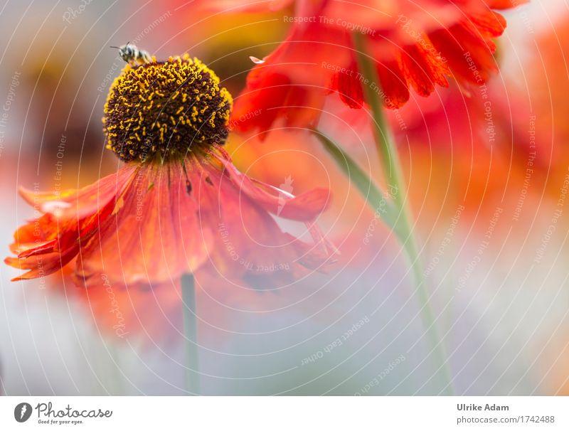 Blütentraum Sonnenbraut elegant Design harmonisch Haus Garten einrichten Innenarchitektur Dekoration & Verzierung Tapete Bild Leinwand Poster Muttertag Natur