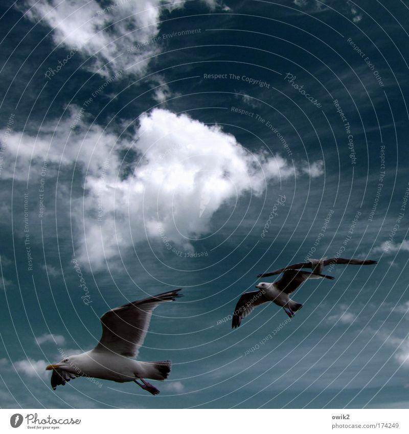 Vogelperspektive Natur schön Himmel Wolken Tier Ferne Leben Bewegung Glück Luft Zufriedenheit Stimmung Zusammensein elegant Umwelt