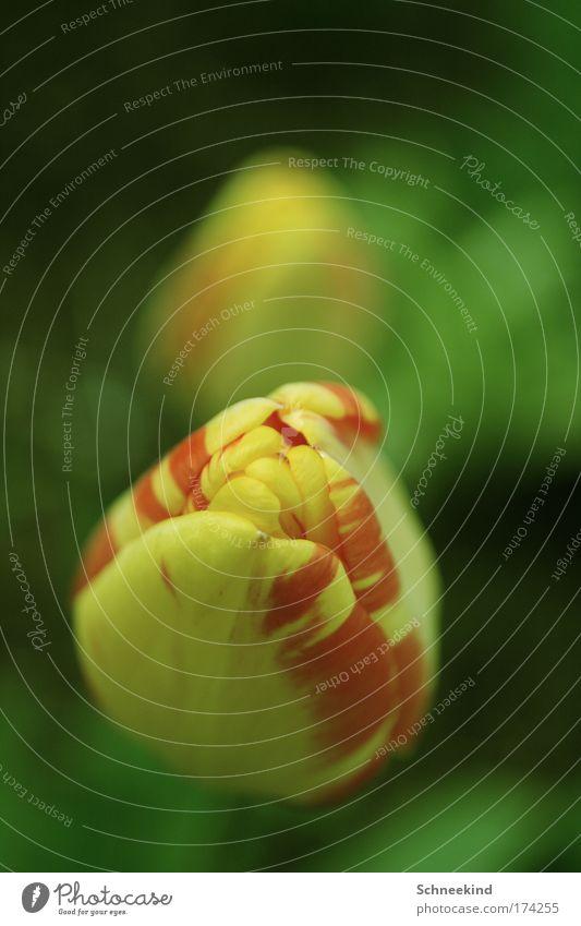 Zur 100 gibt´s ne Blume Farbfoto Außenaufnahme Detailaufnahme Makroaufnahme Menschenleer Textfreiraum oben Tag Schatten Kontrast Schwache Tiefenschärfe