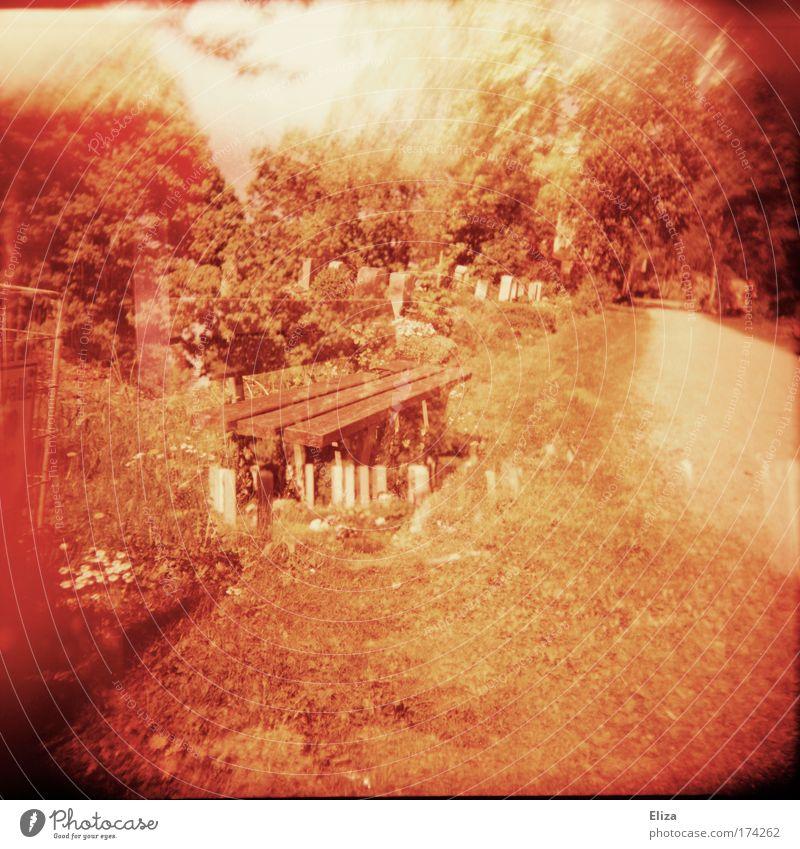 Bank sein Natur Baum rot Wege & Pfade Bank außergewöhnlich Doppelbelichtung Friedhof