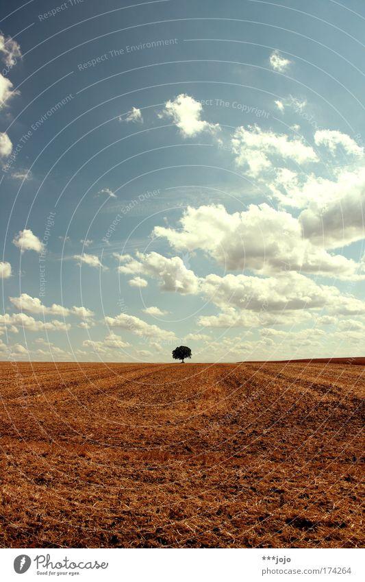 aestival. Natur Himmel Baum blau Pflanze Sommer ruhig Wärme Landschaft braun Feld Umwelt Erde ästhetisch Wachstum Klima