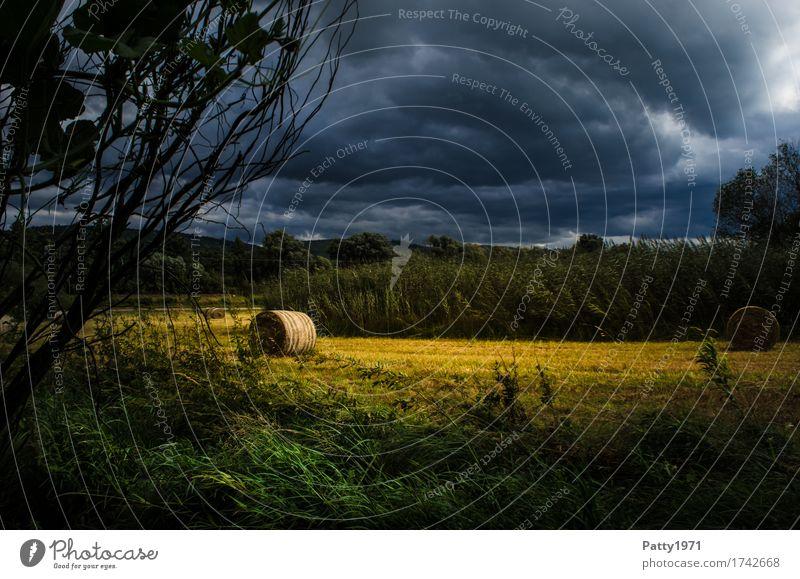 Vor dem Sturm Landschaft Gewitterwolken Sommer Heurolle Heuballen Wiese Feld bedrohlich dunkel blau gelb Umwelt Farbfoto Außenaufnahme Menschenleer Tag Kontrast