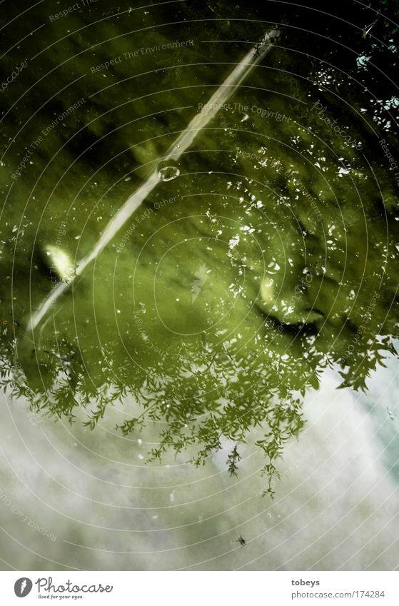 shower Wasser Grünpflanze Wildpflanze Teich dreckig Ekel schleimig grün Vergänglichkeit alt Einsamkeit Freibad Schlamm Pfütze verseucht Im Wasser treiben