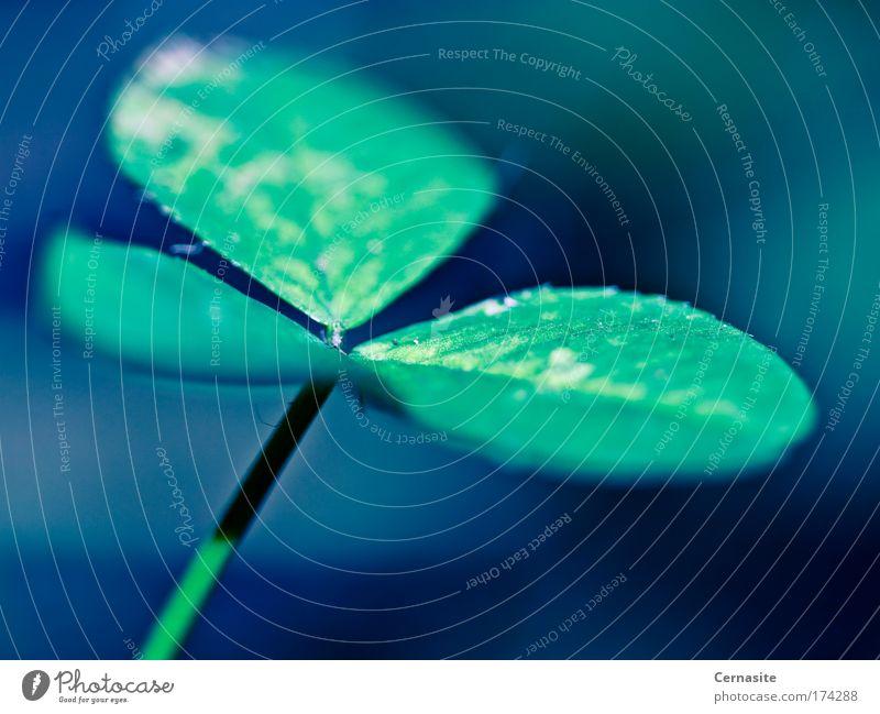 Natur schön grün blau Pflanze Sommer dunkel Wiese Park Wärme Feld elegant frisch ästhetisch nah weich