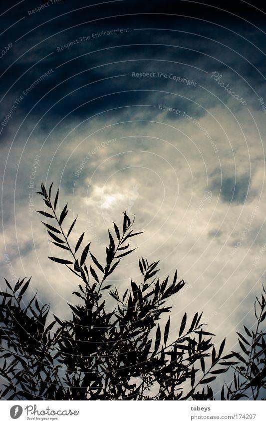 Toskana Natur Sommer Pflanze Blatt Wolken dunkel Stimmung Wetter Wind Klima Idylle Sträucher Sturm exotisch Gewitter schlechtes Wetter