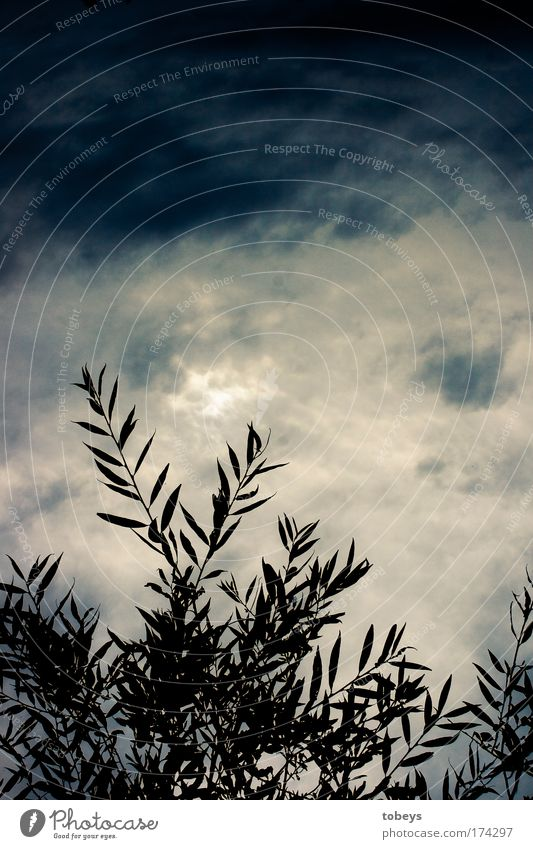 Toskana Natur Wolken Gewitterwolken Sommer Klima Wetter schlechtes Wetter Wind Sturm Pflanze Sträucher Blatt Grünpflanze Nutzpflanze Wildpflanze Topfpflanze