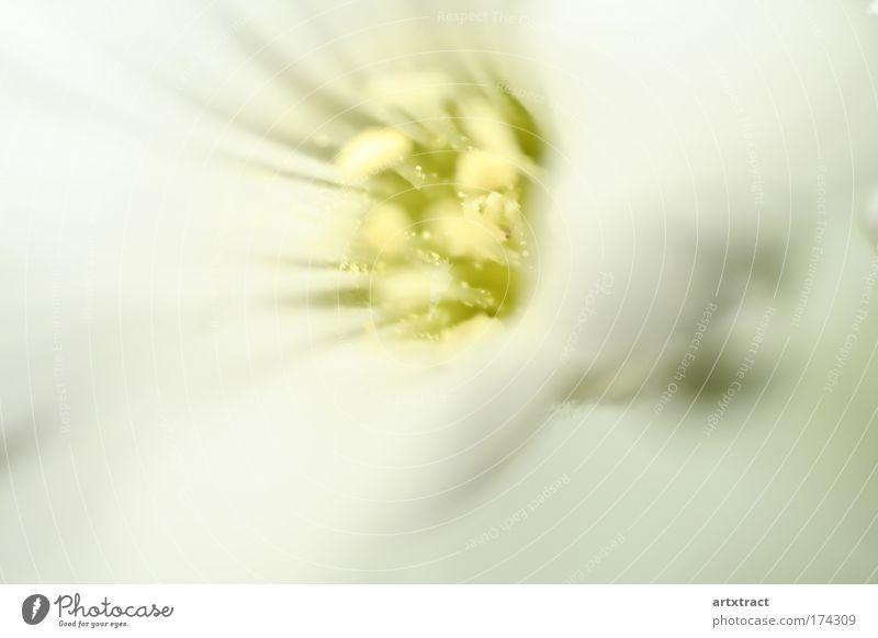 white dream of hornkraut Natur weiß Blume grün Pflanze Sommer ruhig gelb Erholung Blüte Frühling träumen Park Wärme Zufriedenheit hell