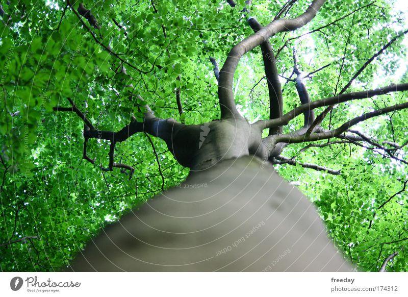 ::: Baumkrone ::: Farbfoto Außenaufnahme Detailaufnahme Strukturen & Formen Schatten Sonnenlicht Schwache Tiefenschärfe Froschperspektive Safari Sommer Umwelt