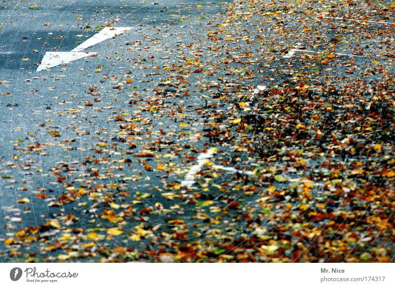 laub parken Menschenleer Umwelt Herbst Wetter Wind Blatt Verkehrswege Straßenverkehr Wege & Pfade Zeichen Verkehrszeichen Linie Pfeil Geschwindigkeit