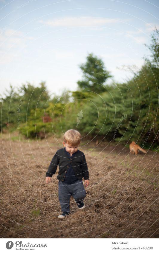 Zusammen ist man weniger allein Mensch Kind Kleinkind Junge Kindheit Leben 1 1-3 Jahre Natur Sommer Schönes Wetter Katze Tier laufen Blick Feld Feldrand