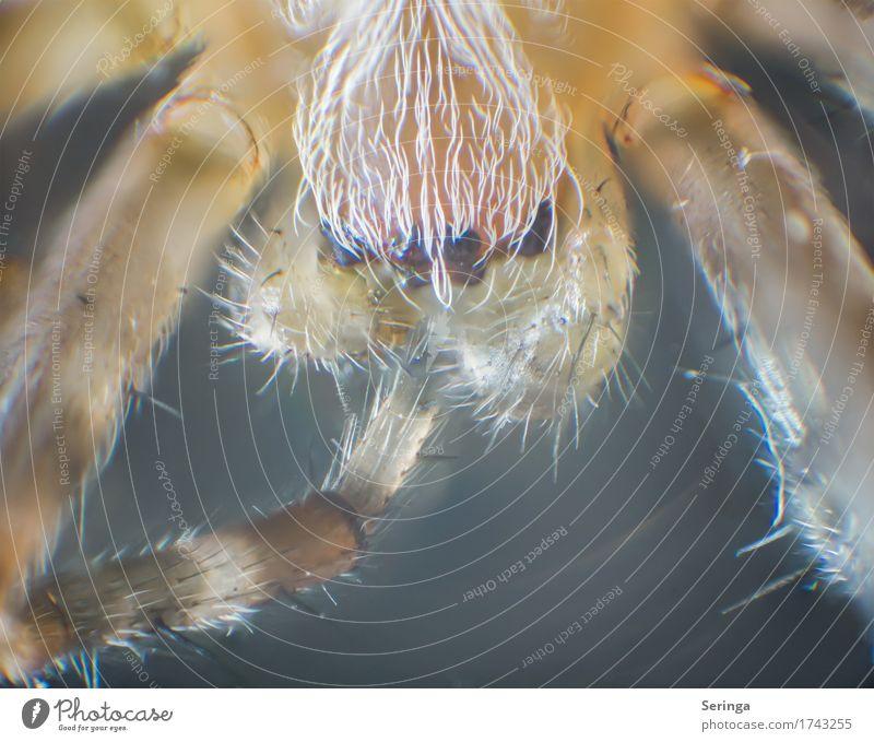 8 Augen Tier Wildtier Spinne Tiergesicht 1 Blick mikroskopisch Mikroskop Spinnenaugen Farbfoto mehrfarbig Innenaufnahme Nahaufnahme Detailaufnahme Makroaufnahme