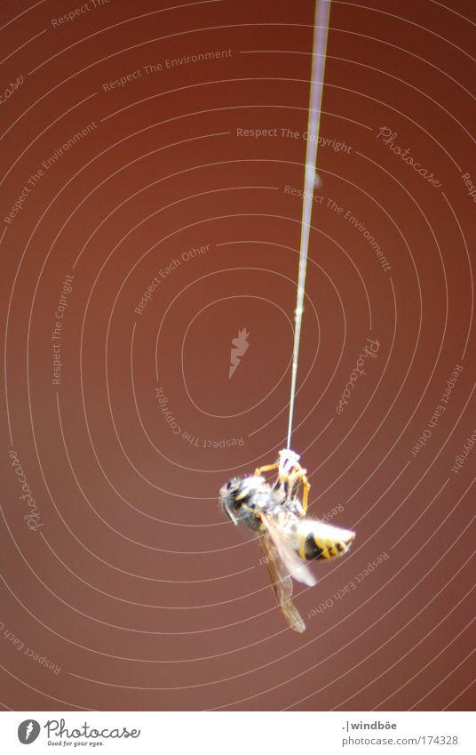 Am seidenen Faden weiß rot schwarz Einsamkeit Tier gelb Erholung Tod Traurigkeit Angst Trauer Netz bedrohlich wild Schmerz Biene