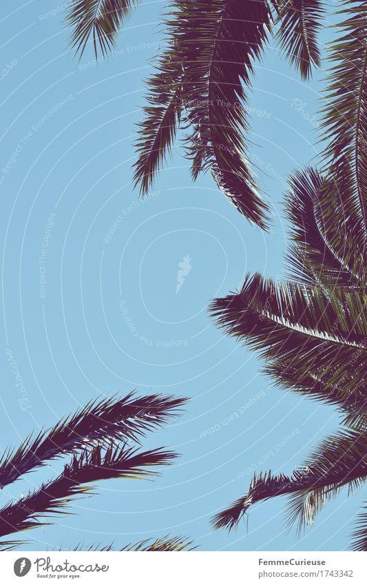 Palmenwedel. Natur Schönes Wetter Pflanze Grünpflanze exotisch Zufriedenheit Palmenstrand Sonne sommerlich Urlaubsstimmung Ferien & Urlaub & Reisen Urlaubsfoto