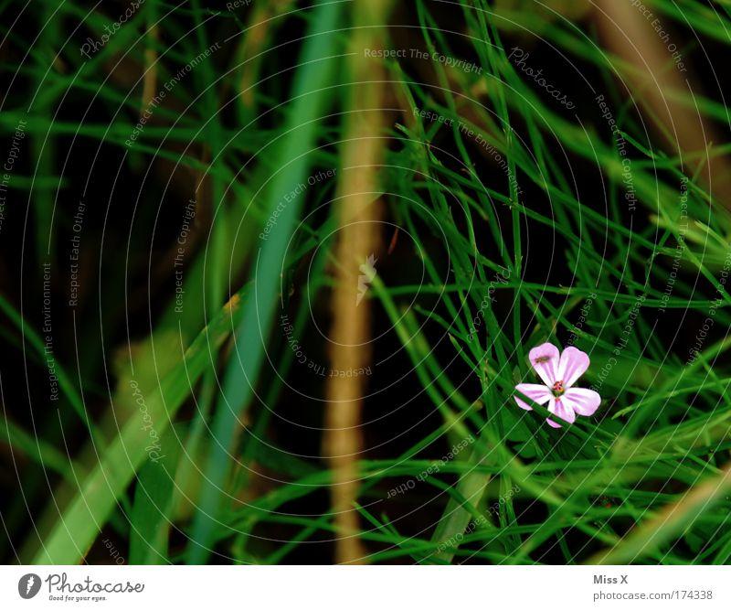 Unscheinbar Farbfoto mehrfarbig Außenaufnahme Nahaufnahme Detailaufnahme Makroaufnahme Menschenleer Umwelt Natur Sommer Pflanze Blüte Feld Wachstum Duft dunkel