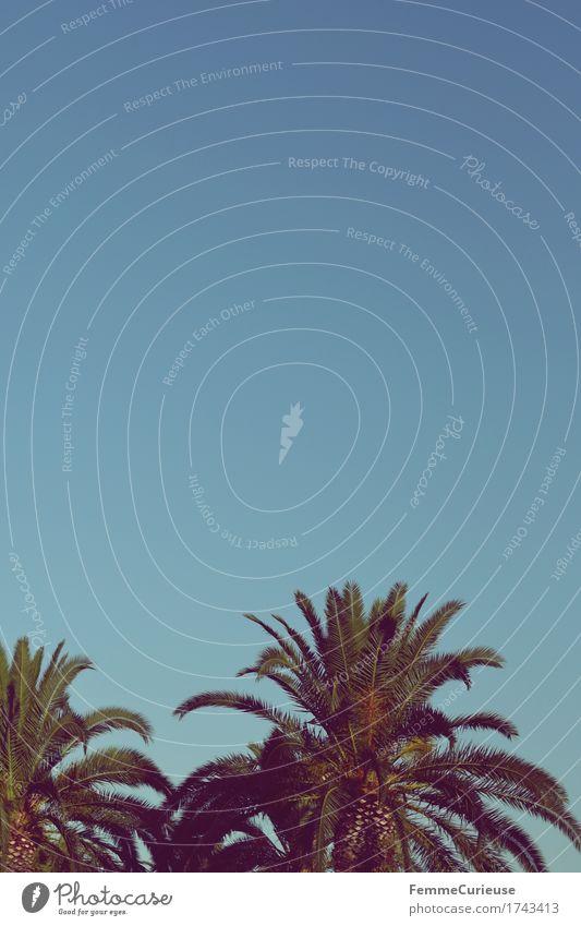 Croatia04. Himmel Pflanze Sommer Erholung Wärme Sommerurlaub Wolkenloser Himmel Baumkrone Urwald Palme sommerlich Kroatien Grünpflanze tropisch Urlaubsfoto