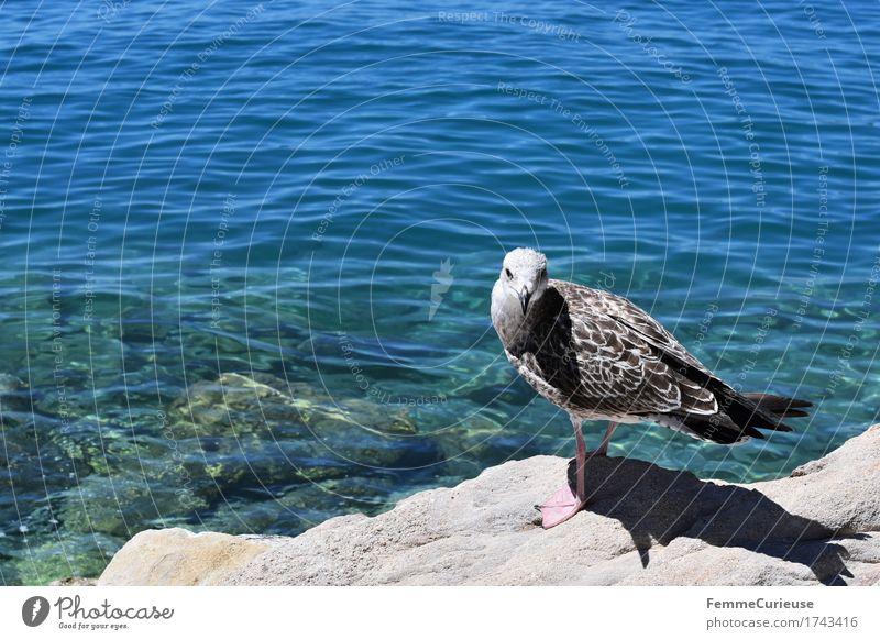 Croatia03. Natur Urelemente Wasser Tier 1 Blick in die Kamera Möwe Meeresvogel Adria Kroatien Klarheit Vogel Sonne Sommer Ferien & Urlaub & Reisen Neugier