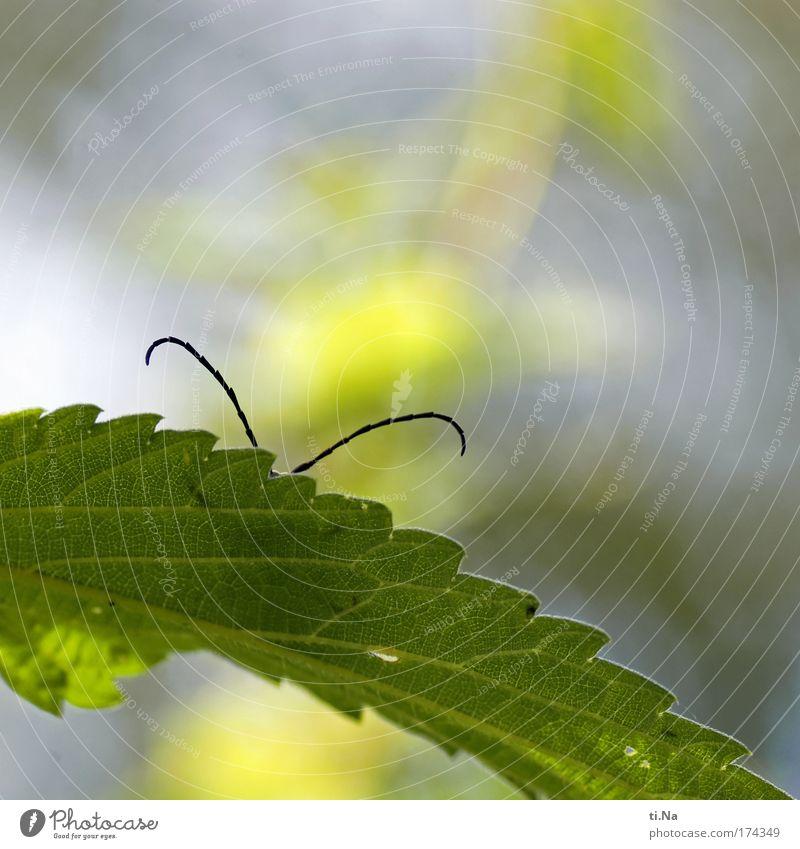 Kalle Käfer will nicht erkannt werden Natur Pflanze Landschaft Tier Umwelt Wiese natürlich Park Feld Wildtier Kommunizieren niedlich Neugier Telefongespräch Käfer Fühler