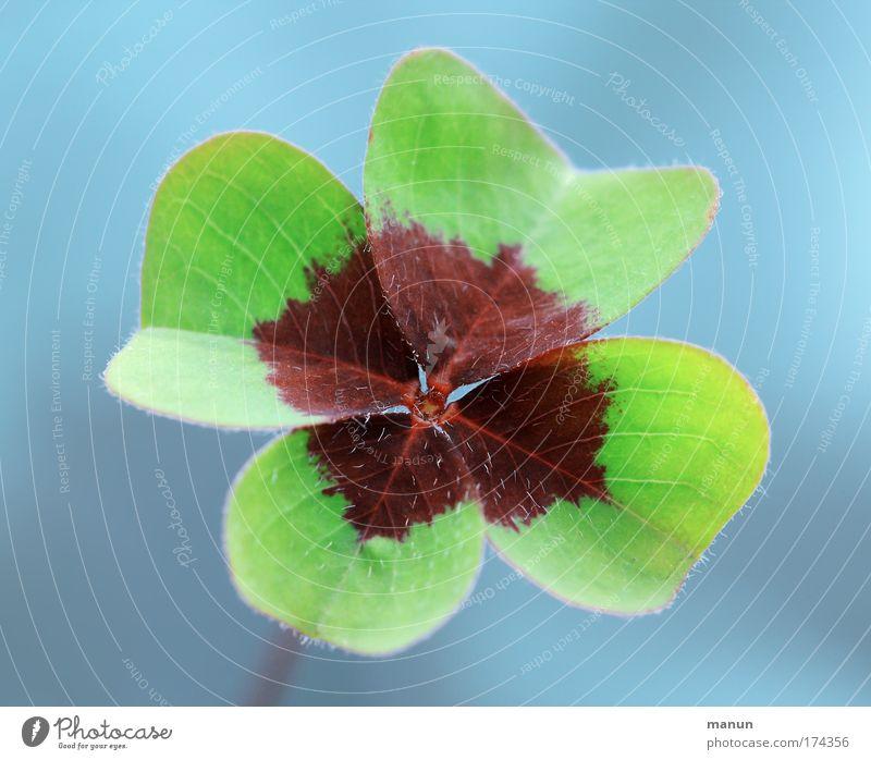 Gutes Gelingen! grün blau Sommer Klee Gefühle Glück Frühling Erfolg natürlich Zukunft Blume Hoffnung Wunsch Kitsch Vertrauen Zeichen