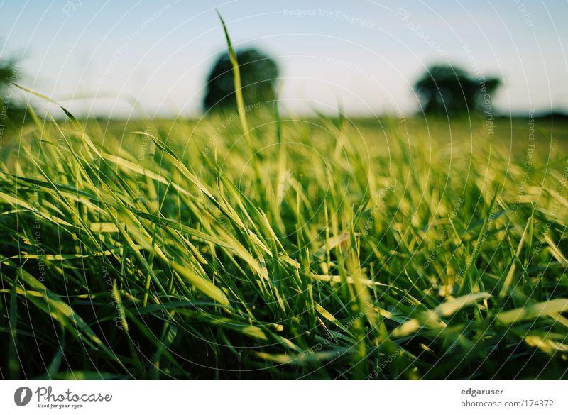 Natur grün Pflanze Sommer Tier Wiese Wärme Gras Frühling Park liegen frisch Schönes Wetter lecker saftig nachhaltig