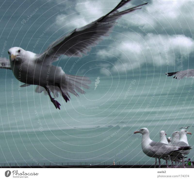 Alphatier elegant Ausflug Freiheit Sommer Umwelt Natur Luft Himmel Wolken Klima Schönes Wetter Wind Küste Tier Vogel Flügel Möwe Feder Tiergruppe Schwarm