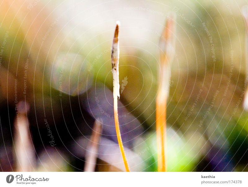 ursprungsgedanke Pflanze Ursprung Samen Keim Halm Wachstum Blendenfleck orange Sprössling Farbfoto Außenaufnahme Makroaufnahme Menschenleer Tag Kontrast