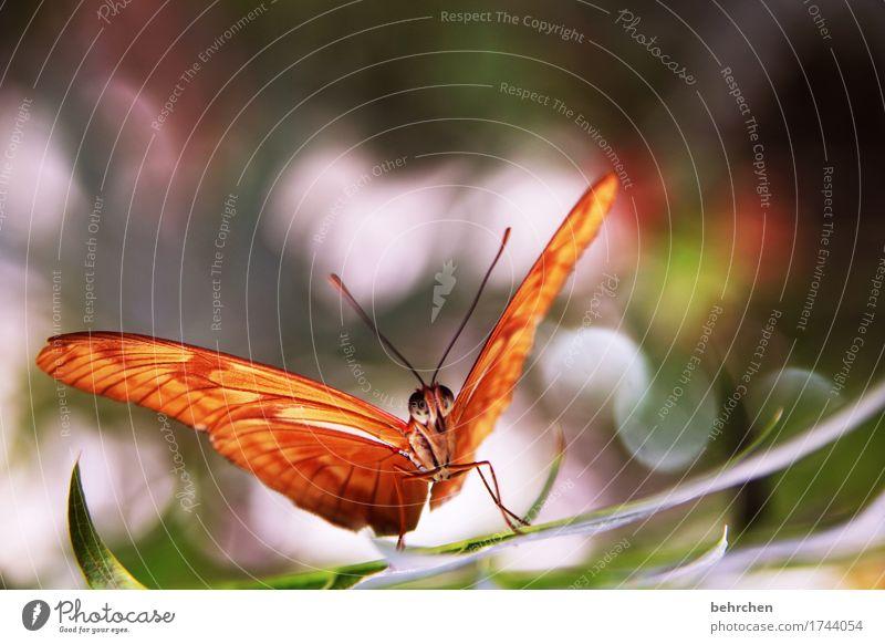 ...nachher Natur Pflanze schön Baum Erholung Blatt Tier Wiese Beine Garten außergewöhnlich fliegen orange Park Wildtier sitzen