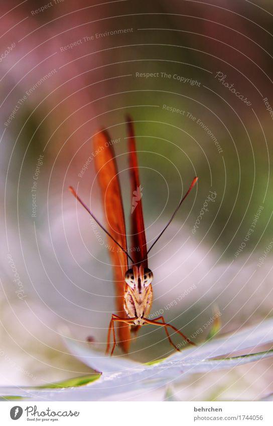 ich kann länger! Natur Pflanze Tier Baum Sträucher Blatt Garten Park Wiese Wildtier Schmetterling Tiergesicht Flügel Beine Fühler Facettenauge 1 beobachten