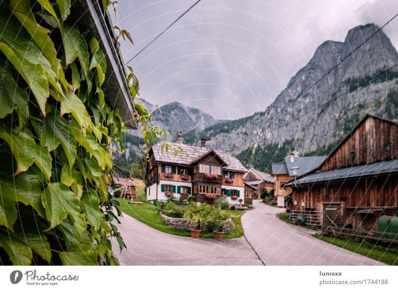 salzkammergut Natur Blatt ruhig Haus Berge u. Gebirge Felsen Gipfel Alpen Bauernhof Hütte Österreich Landleben Holzhaus Traumhaus Pelargonie Salzkammergut
