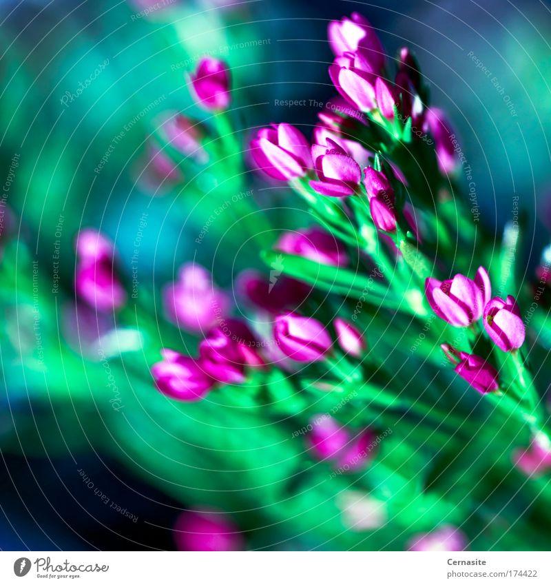 Lacrimosa Farbfoto mehrfarbig Außenaufnahme Nahaufnahme Detailaufnahme Makroaufnahme Menschenleer Tag Schatten Kontrast Lichterscheinung Sonnenlicht