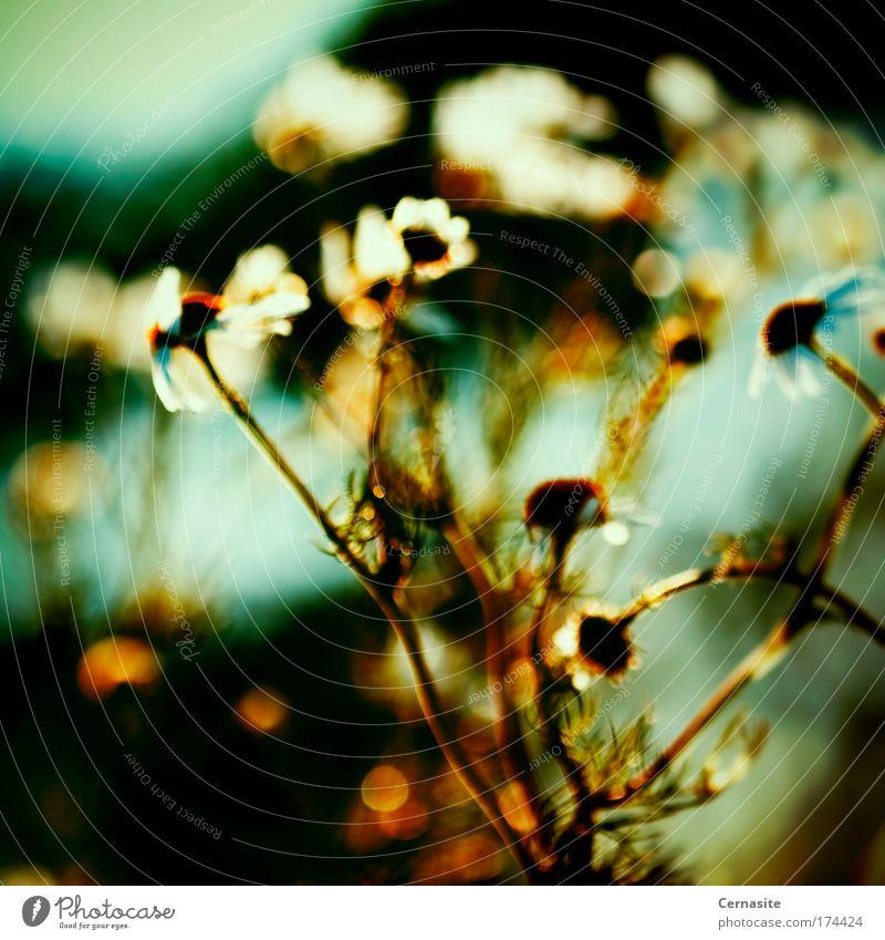 Naturbelassenes Chaos Farbfoto mehrfarbig Außenaufnahme Nahaufnahme Experiment abstrakt Menschenleer Abend Schatten Kontrast Silhouette Sonnenlicht