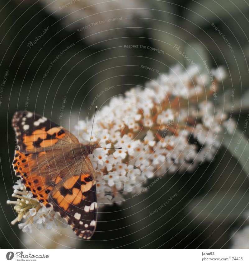 Schmetterling Natur schön Pflanze Sommer Tier Erholung Gefühle Blüte Frühling Glück Park Stimmung Umwelt Hoffnung ästhetisch Romantik