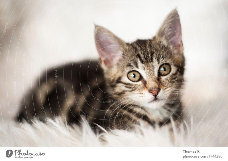 Ein Katzerl am Morgen.. Hauskatze Katzenohr Katzenbaby weich fluffig Fell Tierjunges Katzenauge Haustier Katzenkopf schön süß Schnurren Schnurrhaar 1