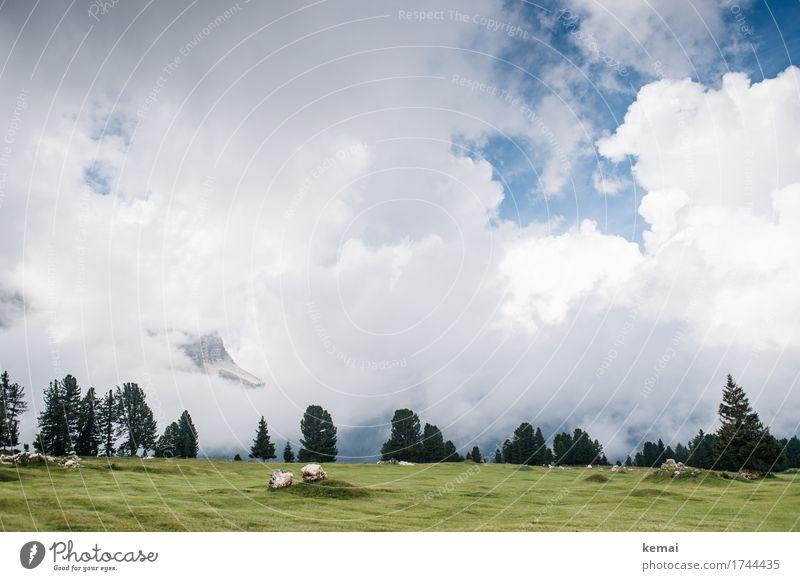 Hide and Seek Himmel Natur Ferien & Urlaub & Reisen Sommer grün Landschaft Baum Wolken ruhig Ferne Berge u. Gebirge Umwelt Wiese Tourismus Freiheit Felsen