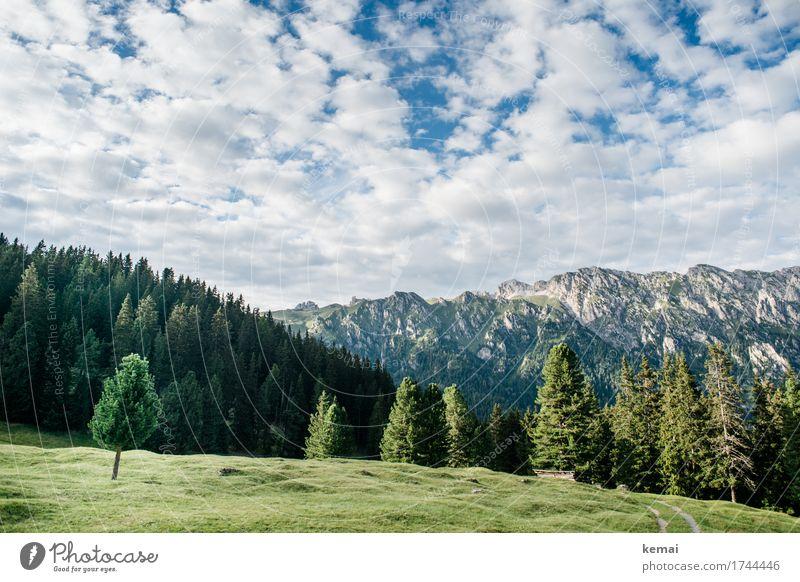 Berge und Wald Himmel Natur Ferien & Urlaub & Reisen Pflanze Sommer grün Landschaft Baum Erholung Wolken ruhig Ferne Berge u. Gebirge Leben Umwelt Lifestyle