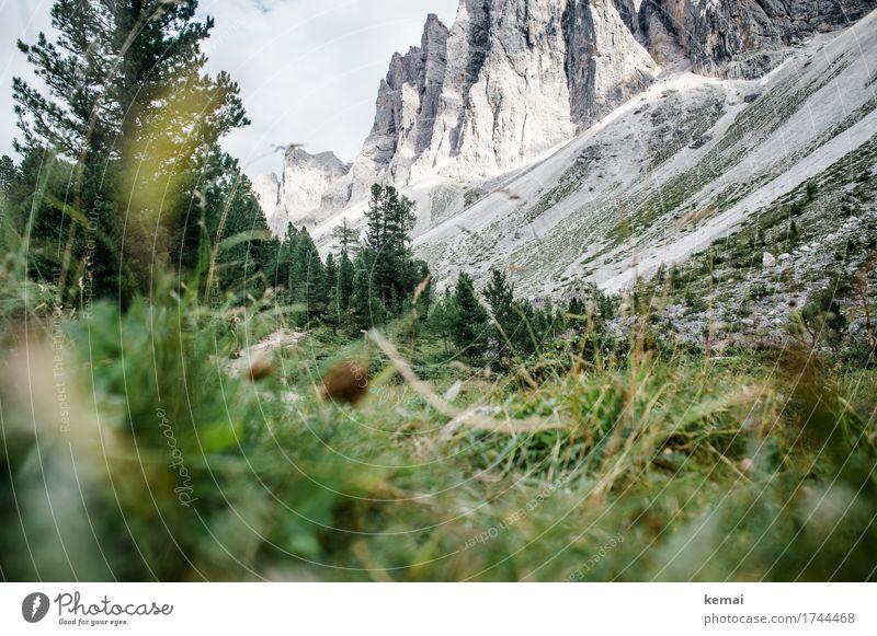 Unscheinbares Detail | Wanderer Mensch Himmel Natur Pflanze Sommer schön grün Landschaft Baum Berge u. Gebirge Leben Umwelt Gras Glück außergewöhnlich grau