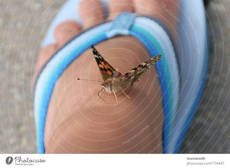 Hallo Du da! mehrfarbig Außenaufnahme Tag Schmetterling 1 Tier fliegen sitzen Neugier Flipflops Fuß Zehen Boden flattern Pause blau Distelfalter Flügel Schweben