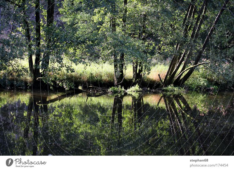 pfreimd Natur Wasser Baum Sonne Pflanze Sommer Ferien & Urlaub & Reisen ruhig Wald Erholung Wiese Gras Wärme Landschaft Zufriedenheit Ausflug