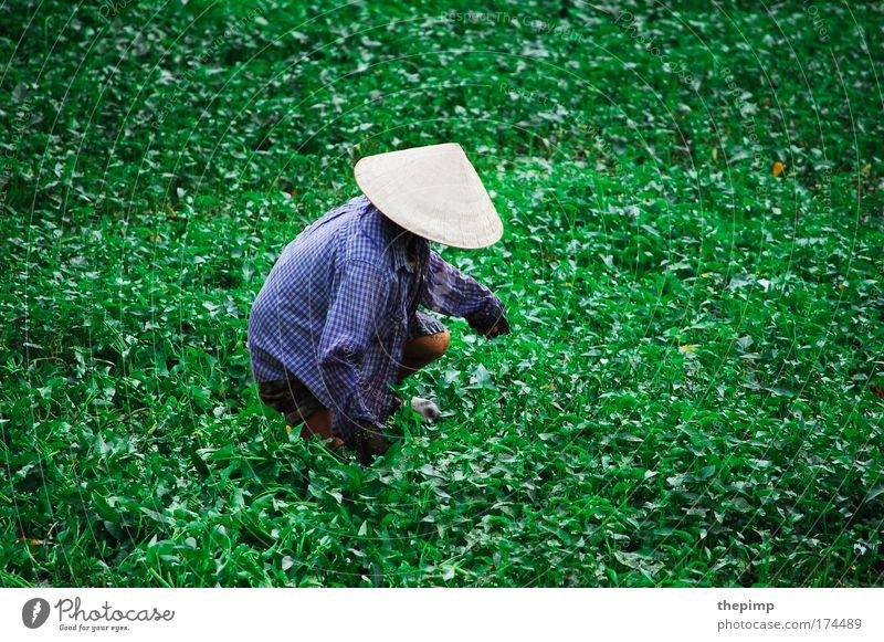 Asian Style Mensch Frau Natur Ferien & Urlaub & Reisen Pflanze Erwachsene Ferne Umwelt Leben Landschaft Arbeit & Erwerbstätigkeit Feld Tourismus Kultur Asien