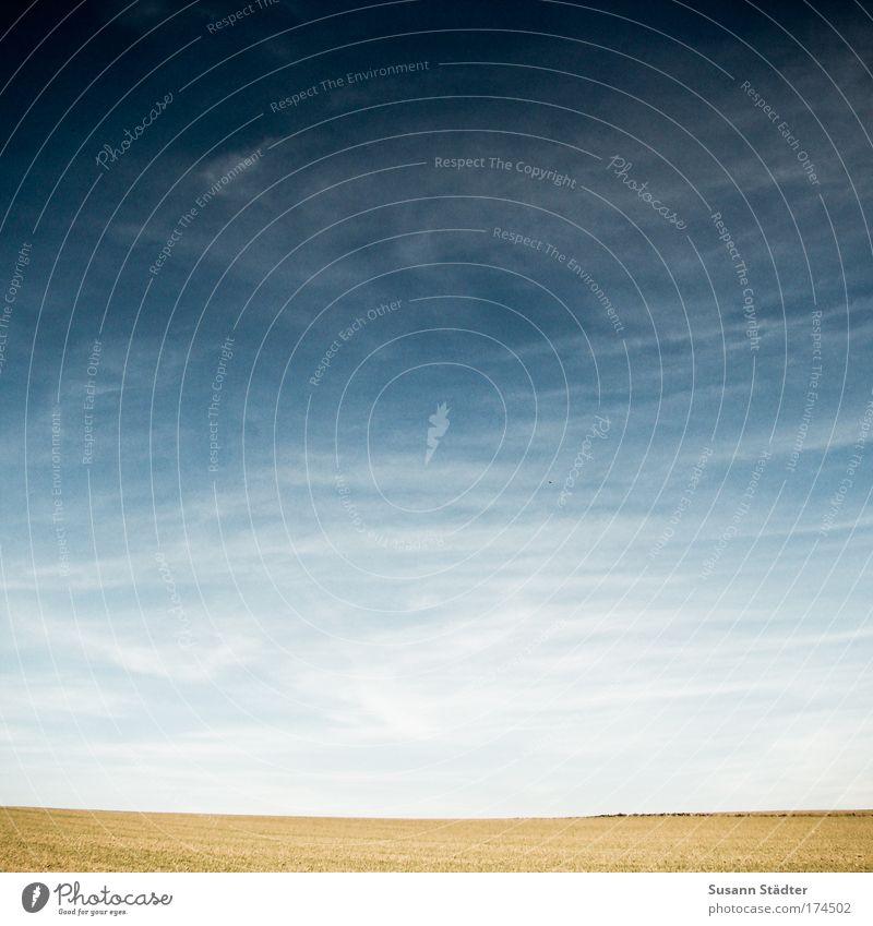 unendliche Weite Natur Himmel Sonne Wolken Erholung Herbst Wiese Stil Landschaft Luft hell Feld Design frei Horizont Klima