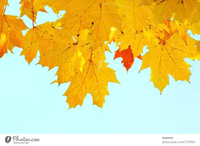Gelbgold Farbfoto Außenaufnahme Muster Strukturen & Formen Textfreiraum unten Hintergrund neutral Tag Sonnenlicht Zentralperspektive Totale Erntedankfest