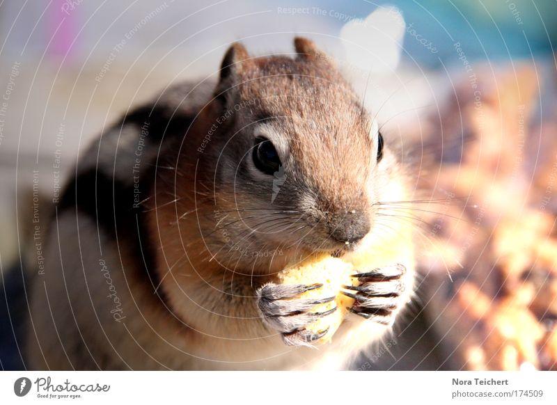 Hungry Little Thing weiß schwarz Ernährung Tier Bewegung Zufriedenheit braun klein sitzen Sicherheit nah Tiergesicht bedrohlich Vertrauen Fell Gelassenheit