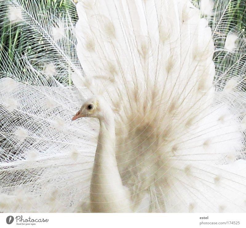 Der weiße Traum Farbfoto Gedeckte Farben Außenaufnahme Nahaufnahme Detailaufnahme Menschenleer Tag Tierporträt Blick Blick in die Kamera Natur Wildtier Vogel