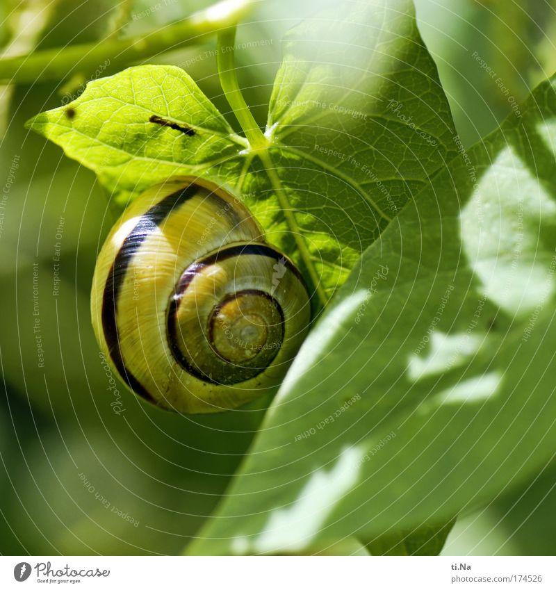 mobiles wohnen im Grünen Farbfoto Außenaufnahme Makroaufnahme Menschenleer Tierporträt Umwelt Natur Landschaft Pflanze Kletterpflanzen Park Wiese Feld Schnecke