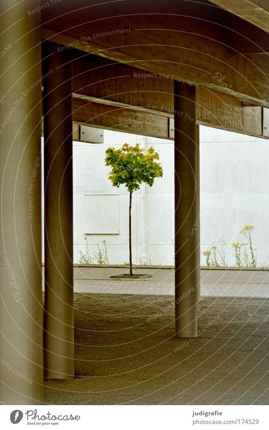 Stadtbegrünung Farbfoto Außenaufnahme Tag Wirtschaft Natur Baum Bauwerk Gebäude Architektur Wachstum zart klein Säule Expo 2000 Hannover Hoffnung