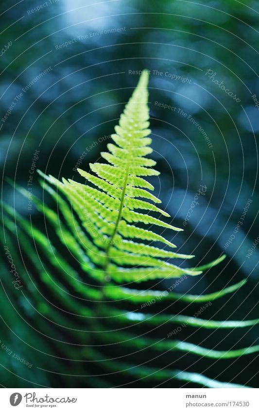Wachstumsspitze Natur Pflanze Sommer ruhig Einsamkeit Erholung Frühling träumen Traurigkeit Park Design Umwelt Trauer Wachstum harmonisch Sinnesorgane